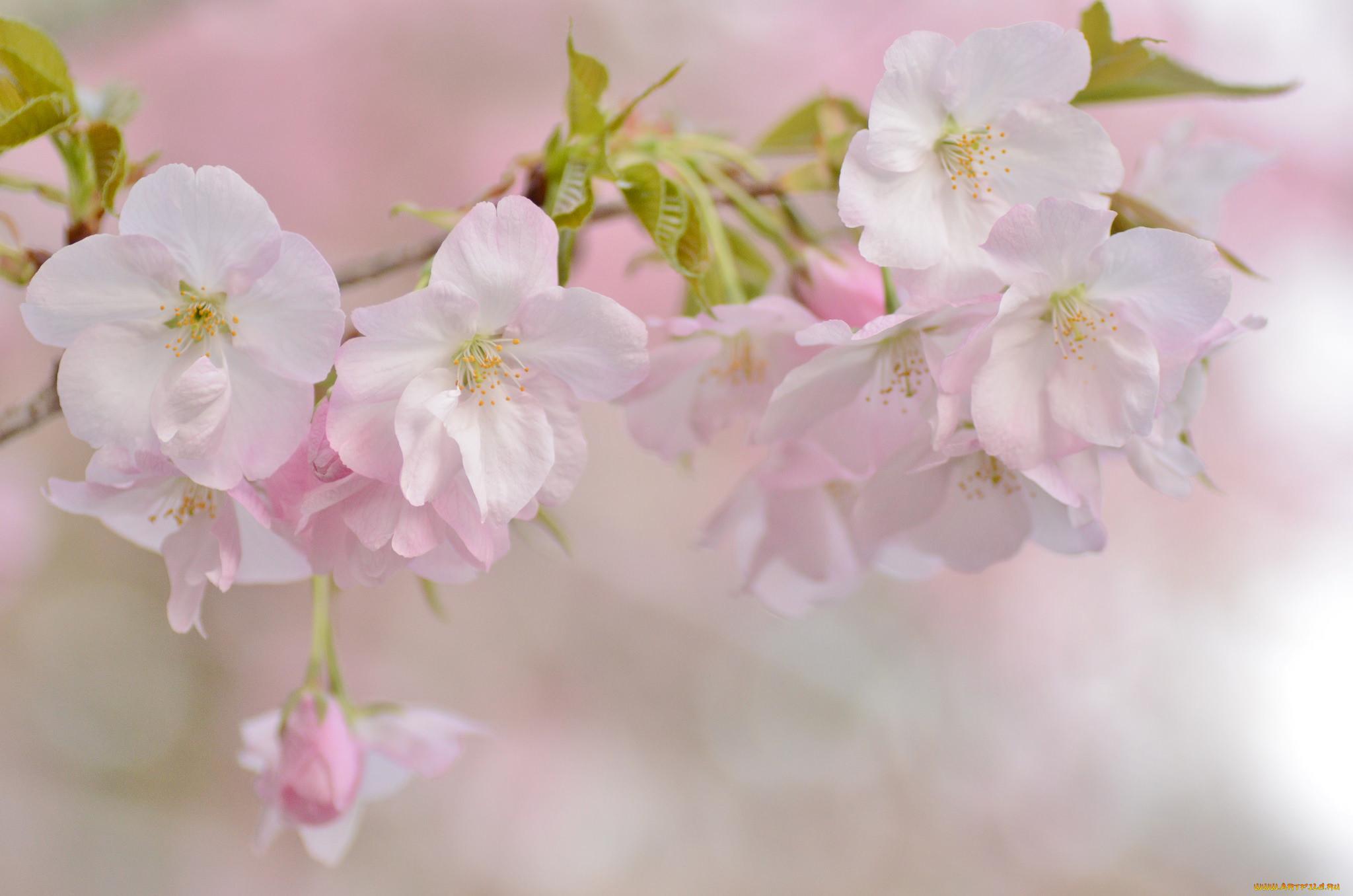 картинки цветы весна нежность